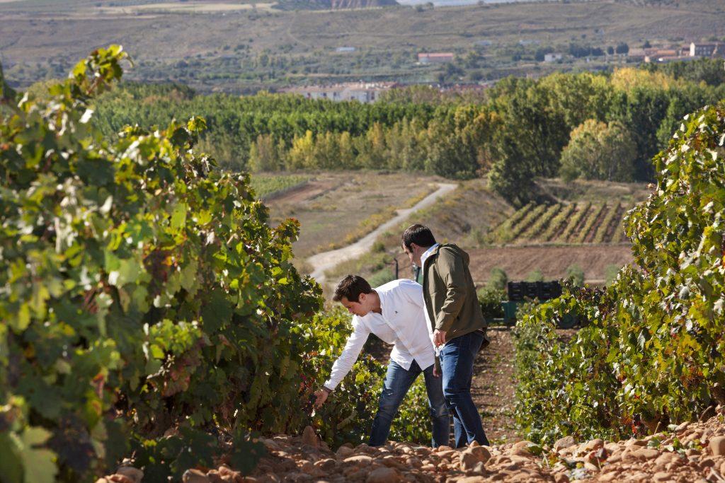 Jorge y Manuel Rivero en el viñedo